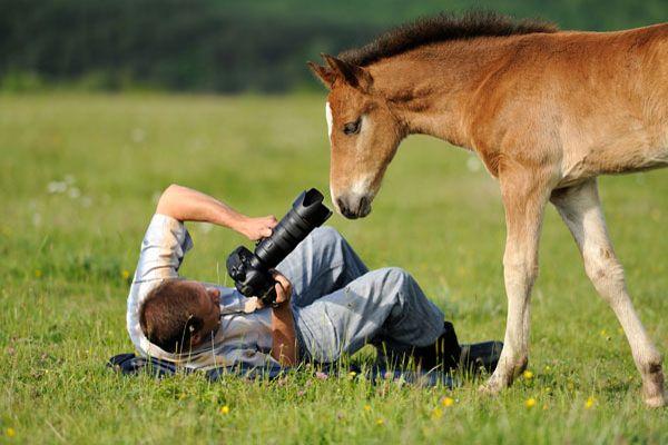 career in wildlife photography